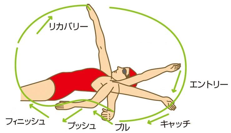 背泳ぎのストローク図解