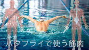 バタフライで使う筋肉は?水泳で筋力をつけるメリット5つ
