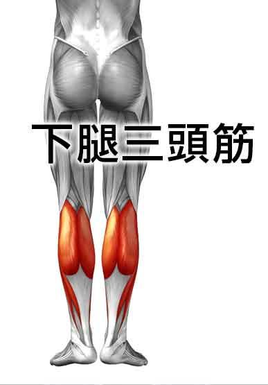 平泳ぎで使う下腿三頭筋(腓腹筋とヒラメ筋)
