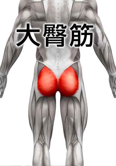平泳ぎで使う筋肉の大臀筋