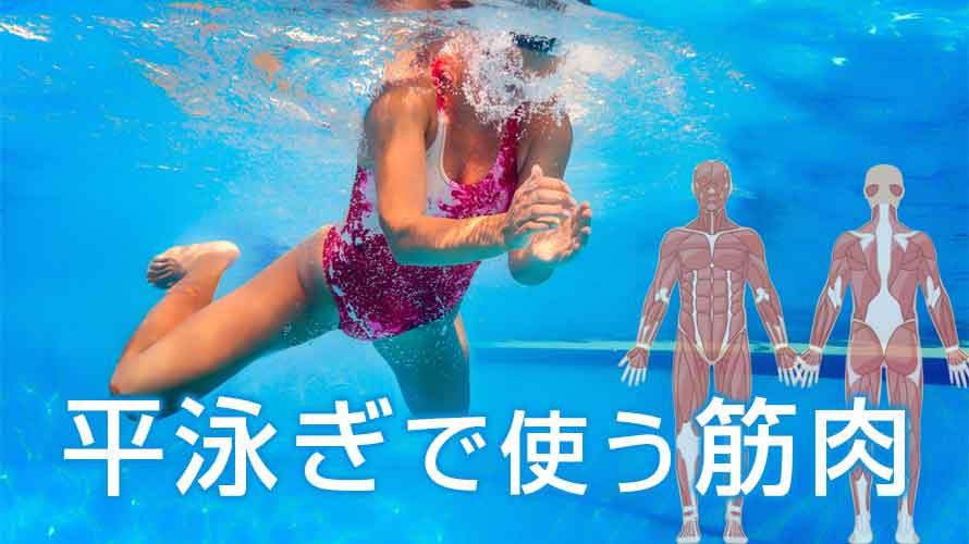 平泳ぎで使う筋肉の鍛え方~速くなるための筋トレ方法とは