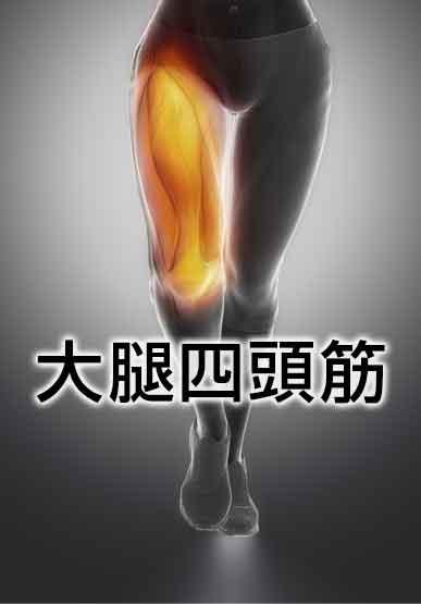 平泳ぎで使う筋肉の大腿四頭筋